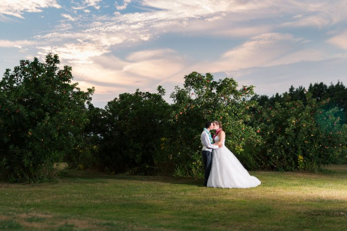 summer evening wedding photograph in an orchard in kent